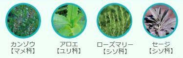 アクアハーブカラー4種のハーブ